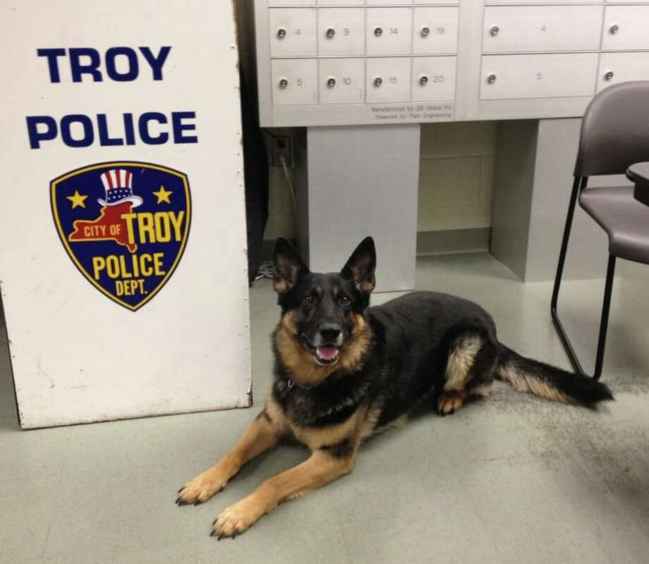 "Troy police dog ""Aron"" who Monday helped officers arrest a Bronx man who ran from police with a loaded handgun. (Troy police photo)"