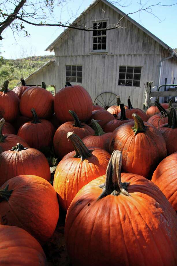 As Halloween approaches pumpkins are stacked on a truck and ready to be carved into jack-o-lanterns at Hartland Orchard in Markham, Va., Sunday, Oct. 16, 2011. (AP Photo/J. Scott Applewhite) Photo: AP, STF / AP