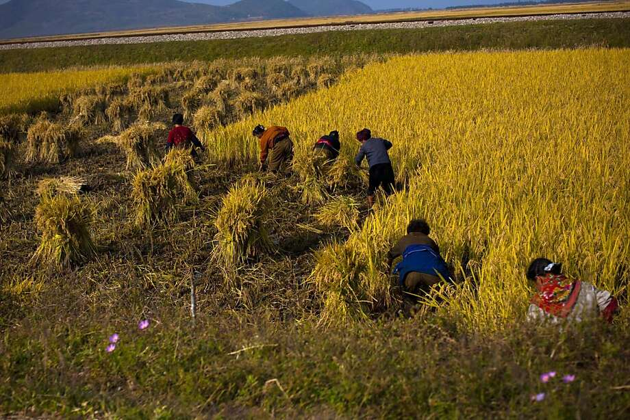 North Korean farmers work in a field along a highway in Kangwon province. Unconfirmed reports say farmers are now being allowed to sell part of their crops at market prices. Photo: David Guttenfelder, Associated Press