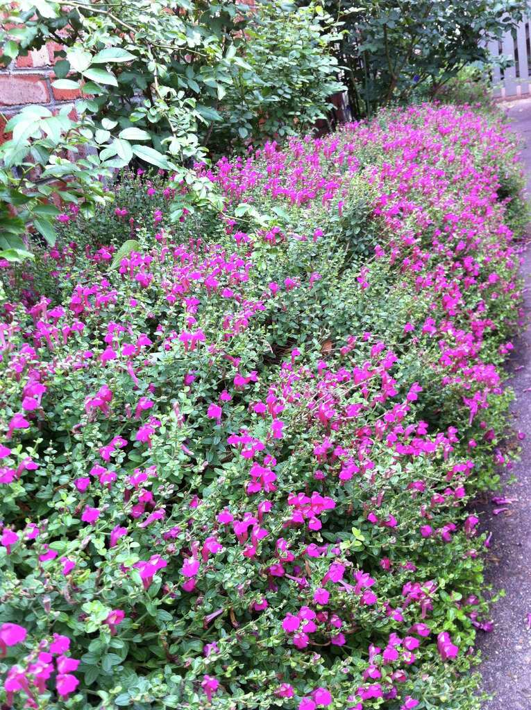 Shop Fall Plant Sales For New Favorites In Your Garden San