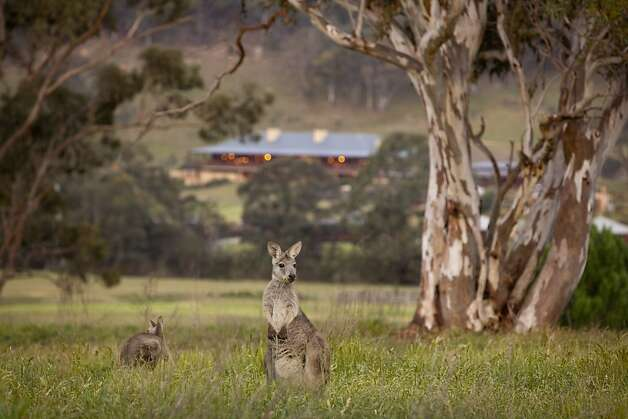 Wildlife in the Wolgan Valley in New South Wales, Australia. Photo: Wolgan Valley Resort & Spa