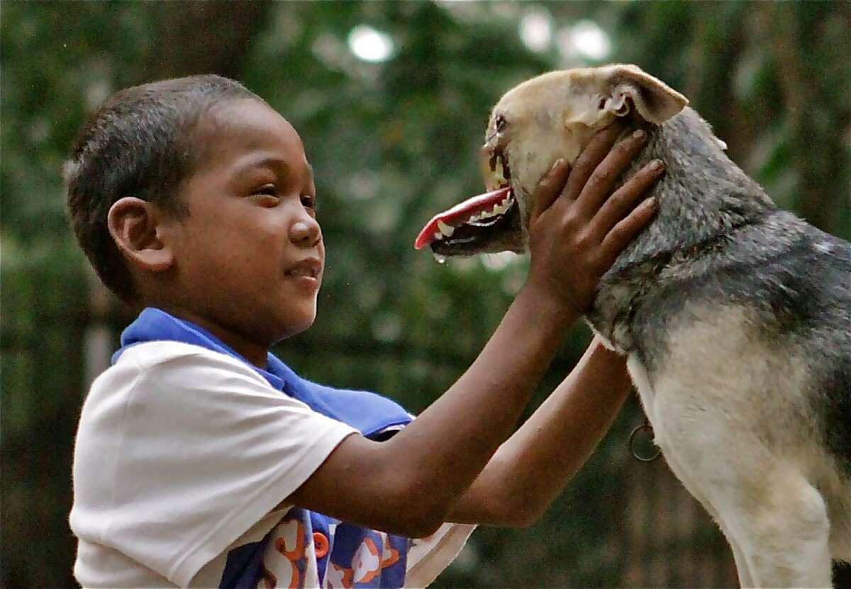 Kabang, pictured here, had her snout and upper jaw sheared off when she leapt in front of a speeding motorcycle just before Christmas last year in an apparent attempt to save two little girls in Zamboanga City, Philippines. The dog, which has become a national hero and an international sensation, is being brought to UC Davis for reconstructive surgery.