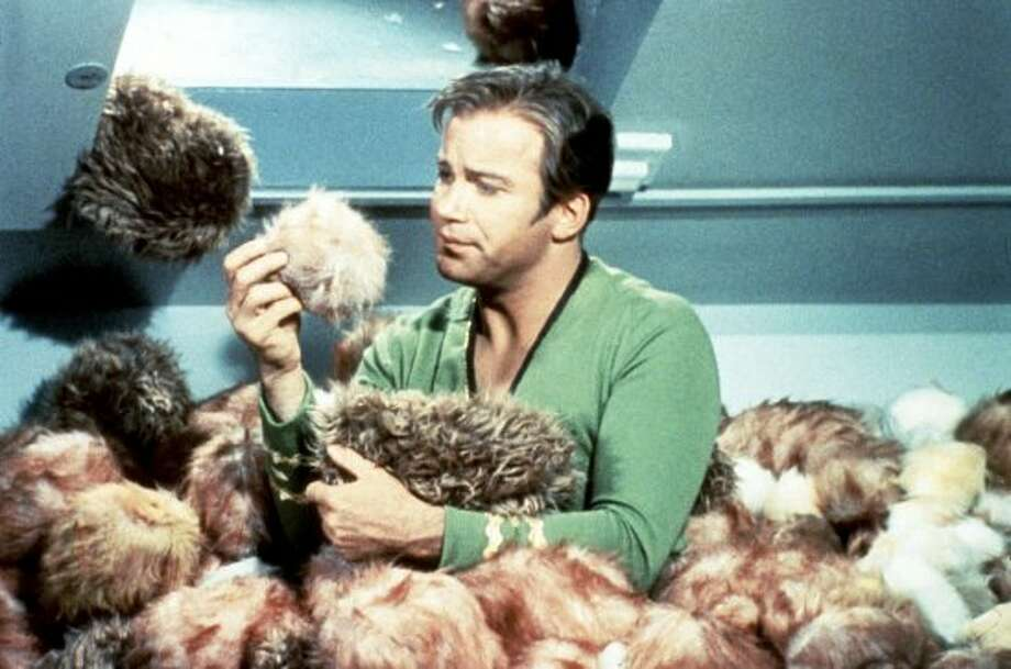 Star Trek's James Kirk, portrayed by actor William Shatner, is surrounded by 'tribbles' during 'The Trouble with Tribbles' episode of the classic science fiction series 'Star Trek.'  (Courtesy of Paramount Pictures  / ABC TV)