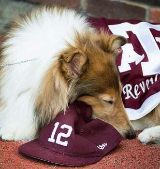 With the Aggies leading Southern Methodist by a score of 41-3 after a touchdown in the fourth quarter, Texas A&M mascot Reveille VIII rests in the end zone of an NCAA football game at Ford Stadium, Saturday, Sept. 15, 2012, in Dallas. Texas A&M won the game 48-3. Photo: Smiley N. Pool, Houston Chronicle / © 2012  Houston Chronicle
