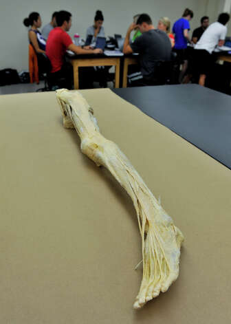 A plasticized human leg is used in class at the University of the Incarnate Word School of Physical Therapy. The newly opened facility is at 9160 Guilbeau Rd. Photo: For The Express-News
