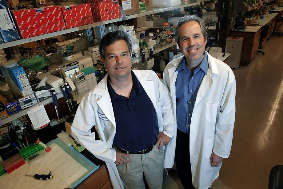 Pierre Desprez (left) and Sean McAllister have been researching marijuana's active molecules as potential disease inhibitors. Photo: Carlos Avila Gonzalez, The Chronicle