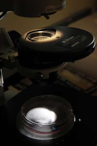 A petri dish with cancer cells is visible in a microscope at the CPMCRI lab in San Francisco, Calif., on Thursday, September 6, 2012. Pierre Desprez, Ph.D, and Sean McAllister, Ph.D,  are researchers doing work on cannabis and cancer at San Francisco's California Pacific Medical Center Research Institute. They've found that a non-psychotropic compound in cannabis has been found to inhibit the activity of a gene responsible for aggressive breast cancers, particularly triple negatives or those that don't respond to hormone therapies. But researchers believe that the compound may also stop metastasis in some hormone-dependent breast cancers as well as other types of cancer. Photo: Carlos Avila Gonzalez, The Chronicle