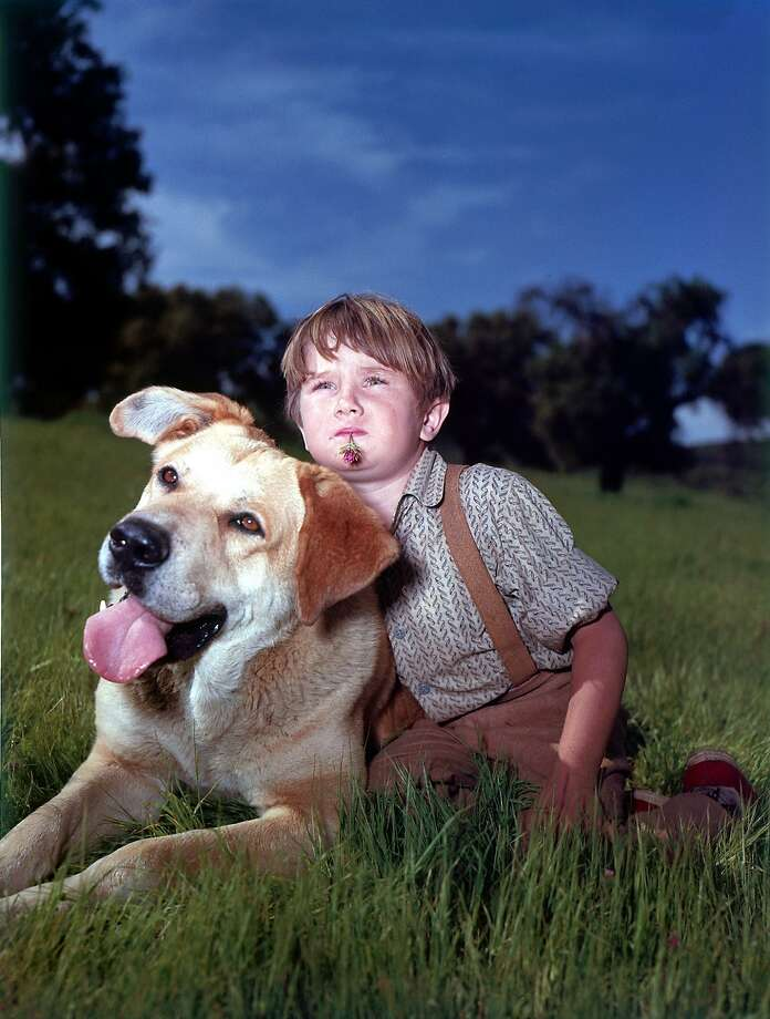 """Old Yeller"" screens on Saturday at the Castro Theatre as a part of the first annual Canine Film Festival. The festival continues through Oct. 8. Photo credit: Walt Disney Pictures Photo: Walt Disney Pictures"