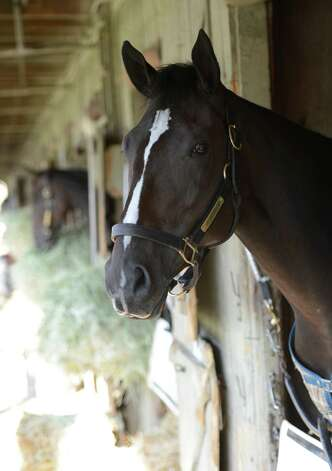 Two year old phenom Archwarrior hangs out in his stall in Todd Pletcher's barn at the Oklahoma Training Center in Saratoga Springs, N.Y. Sept. 17, 2012    (Skip Dickstein/Times Union) Photo: Skip Dickstein / 00019283A