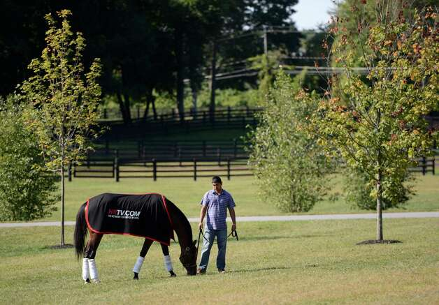 Travers co-winner Alpha grazes in the lush grass with groom Abraham Salacido after race meeting as she stands in her stall on Sheik Mohammad's training center in Saratoga Springs, N.Y. Sept. 17, 2012    (Skip Dickstein/Times Union) Photo: Skip Dickstein / 00019283A