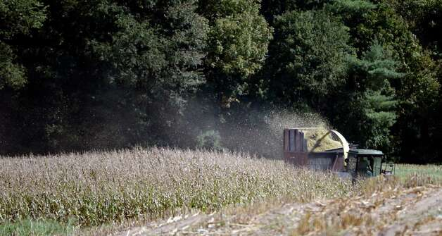 Corn stalks are harvested in Stillwater, N.Y. Sept. 17, 2012. Corn stalks are often used for winter feed on dairy farms. (Skip Dickstein/Times Union) Photo: Skip Dickstein