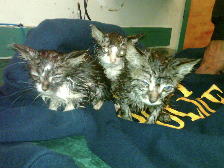 Three kittens were found Tuesday morning abandoned in a laundry basket at the corner of  Ida and Third streets in Troy.