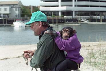Nash attorneys: Chimp was 'ticking time bomb' - Connecticut Post