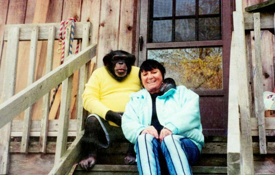 Left to right; Travis the 10 year old chimpanzee picture with his owner Sandra Herold, photo taken in 2002. Photo: Contributed Photo