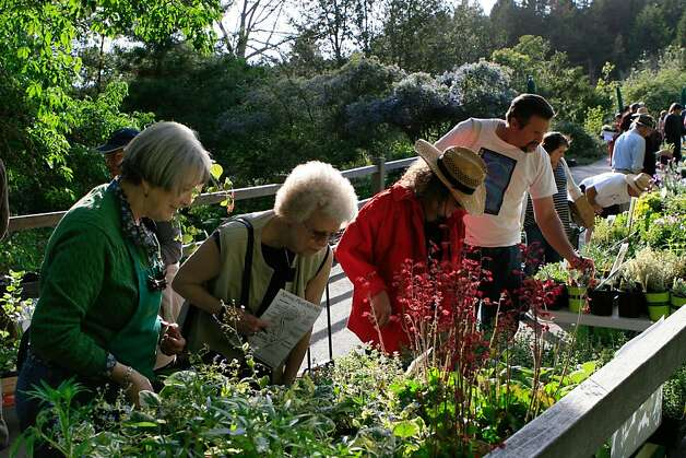 Shoppers examine plants at the annual fall sale at the UC Botanical Garden in Berkeley. This year's sale is Sept. 30. Photo: UC Botanical Garden