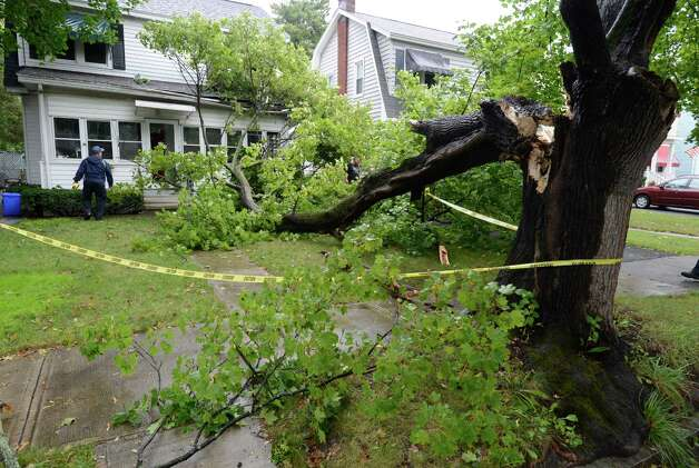 A large branch Tuesday lands on the front of 62 Edgecomb St. Albany.  (Skip Dickstein / Times Union) Photo: Skip Dickstein
