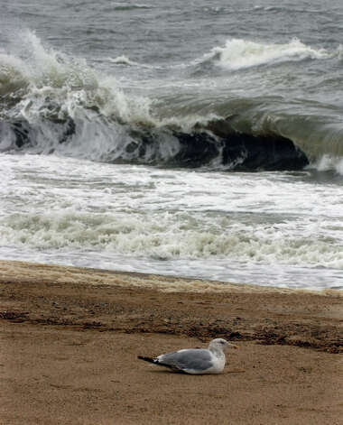 A sea gull hunkers down as waves from the Long Island Sound break behind it along Beach Avenue in the Woodmont section of Milford, Conn. on Tuesday September 18, 2012. Photo: Christian Abraham / Connecticut Post