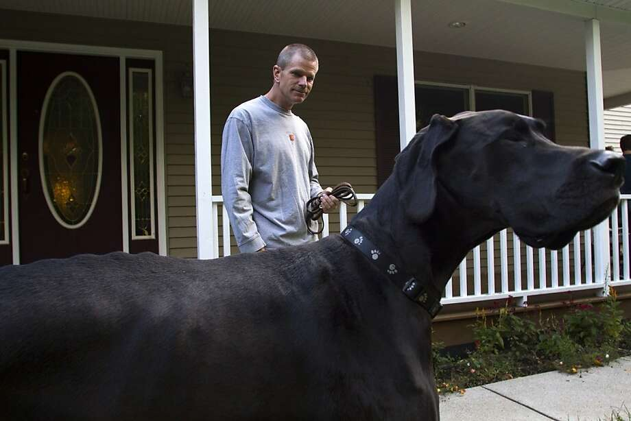After walking Zeus on a leash, Kevin Doorlag's arm is still in its socket. Bonus! Photo: Josh Mauser, Associated Press