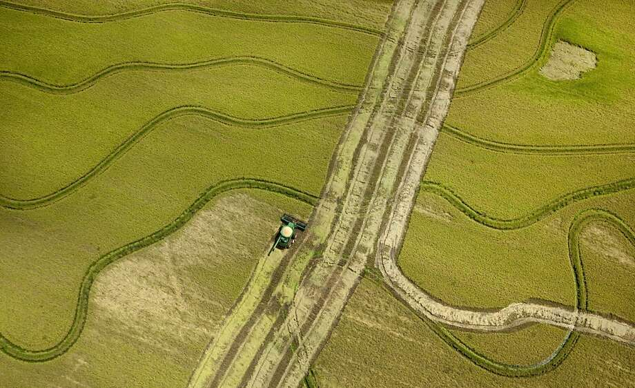 A combine harvests rice near Tucker, Ark., last month. Consumer groups want the government to set limits on arsenic in rice, but the FDA says there is no evidence that it's unsafe to eat. Photo: Danny Johnston, Associated Press