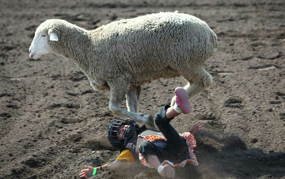 "Araya Trujillo, 4, is tossed from a sheep during a ""Mutton Bustin'"" competition at the Puyallup Fair, soon to be known as the Washington State Fair. Photo: JOSHUA TRUJILLO / SEATTLEPI.COM"