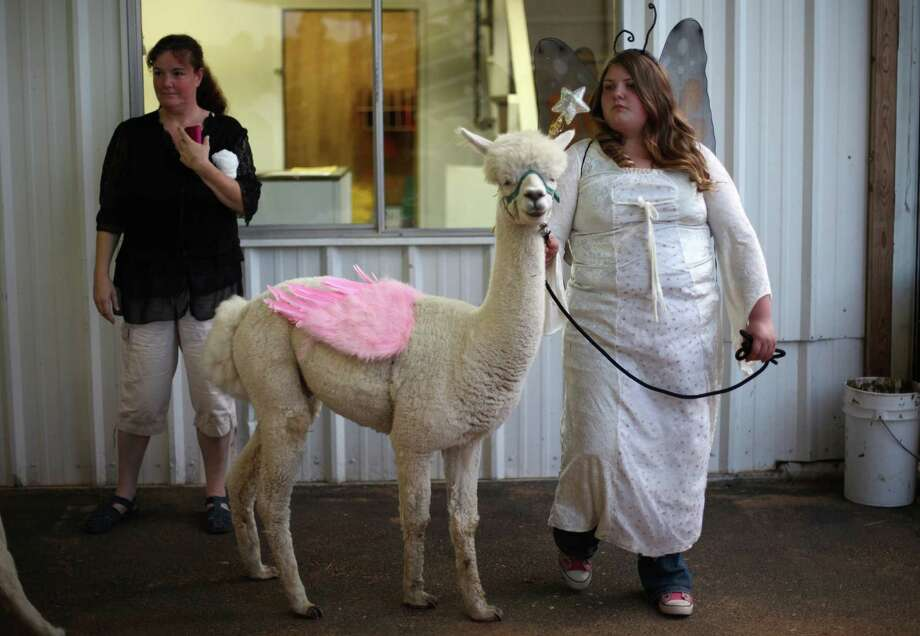 4-H and FFA members participate in an animal costume contest at the Puyallup Fair, soon to be known as the Washington State Fair. Photo: JOSHUA TRUJILLO / SEATTLEPI.COM