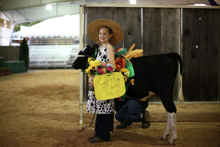 Lacey Bishop, 11, of Chimacum participates with her cow lightning in an animal costume contest at the Puyallup Fair. Photo: JOSHUA TRUJILLO / SEATTLEPI.COM