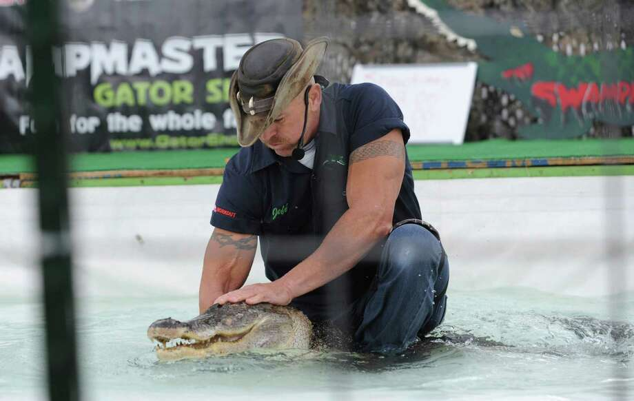 Swampmaster Jeff Quattorocchi, of Fla., holds one of his alligators at the Norwalk Boat Show, a in-water boat show, runs Thursday through Sunday September 20-23, 2012 10am-6pm daily. Photo: Helen Neafsey / Greenwich Time