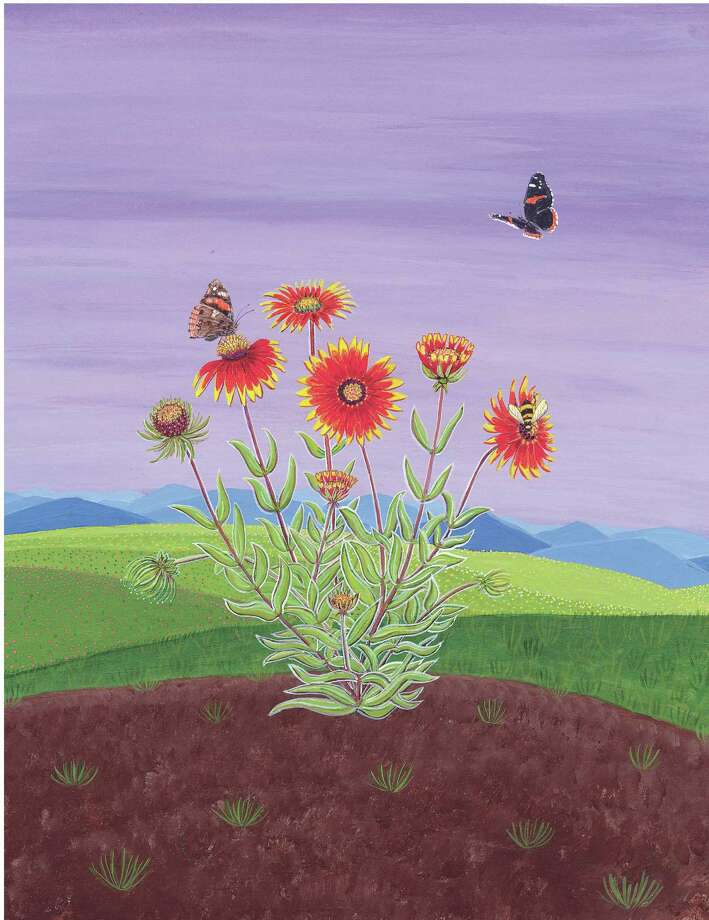 Indian blanket (Gaillardia pulchella) blooms in spring and summer and into autumn with adequate moisture and warmth. Photo: Joy Fisher Hein Illustration