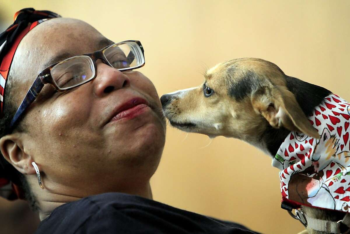 Dorothy Blakely plays with Shea, one of the foster dogs in the WOOF program, at graduation in San Francisco, Calif., Friday, September 21, 2012. The WOOF program trains recently homeless individuals to care for foster animals. Blakely first fostered Shea in the program then fostered Shea's sister Sheba.