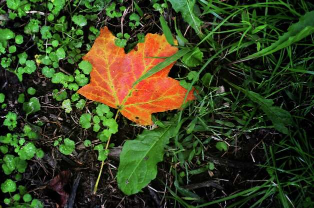 One of the first signs of fall Wednesday, Sept. 19, 2012 at Silverman's Farm in Easton, Conn. Photo: Autumn Driscoll / Connecticut Post