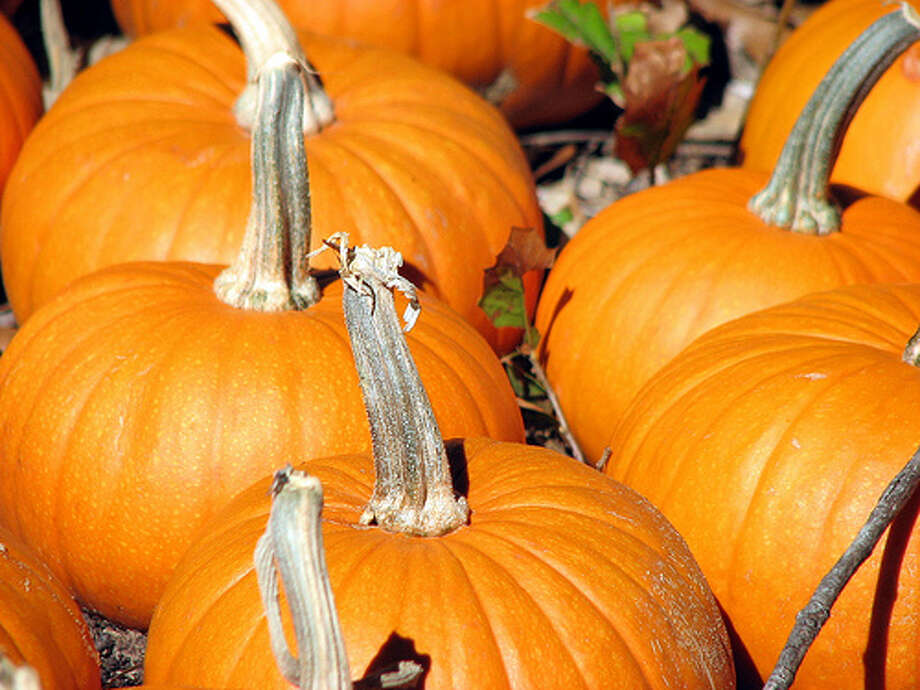 Pumpkin Center,  N.C., population 2,222; and Pumpkin Bend, Ark., population 276