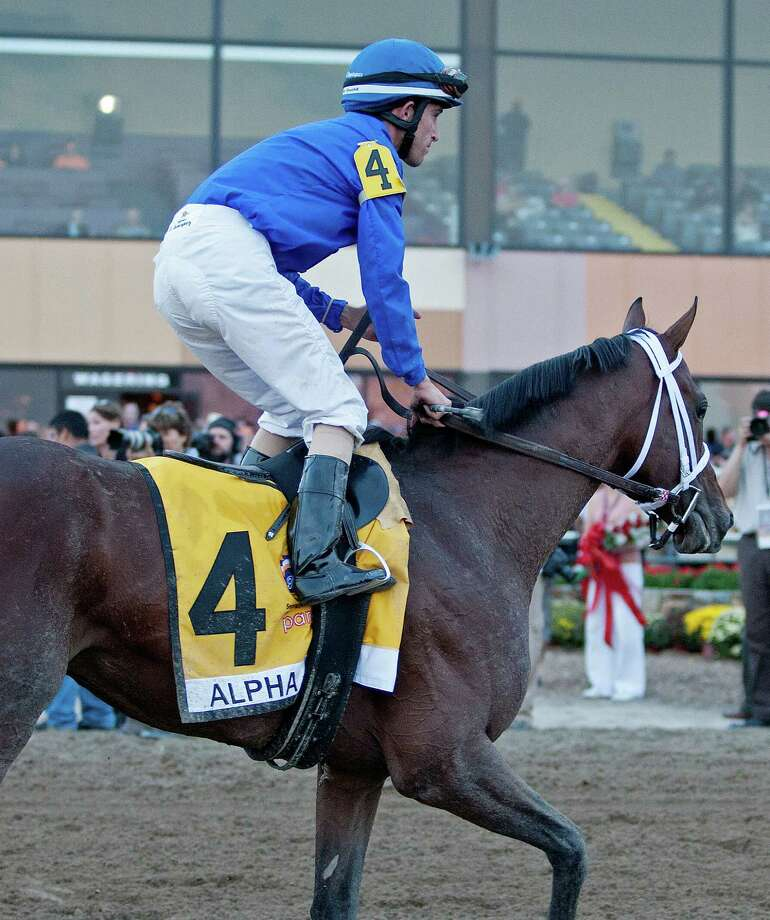 Alpha returns to unsaddling area after Pennsylvania Derby on Sept. 22, 2012. (Tom Keyser / Special to the Times Union)