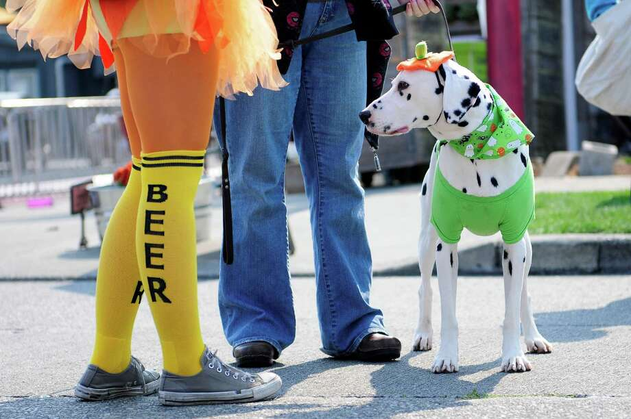 Chico, 7, a dalmatian, enjoys Oktoberfest with Jordan Moline, left,  in Fremont on Sunday. The fall kick-off festival featured beer tasting, a 5K run, a pumpkin carving contest and live music. Photo: LINDSEY WASSON / SEATTLEPI.COM