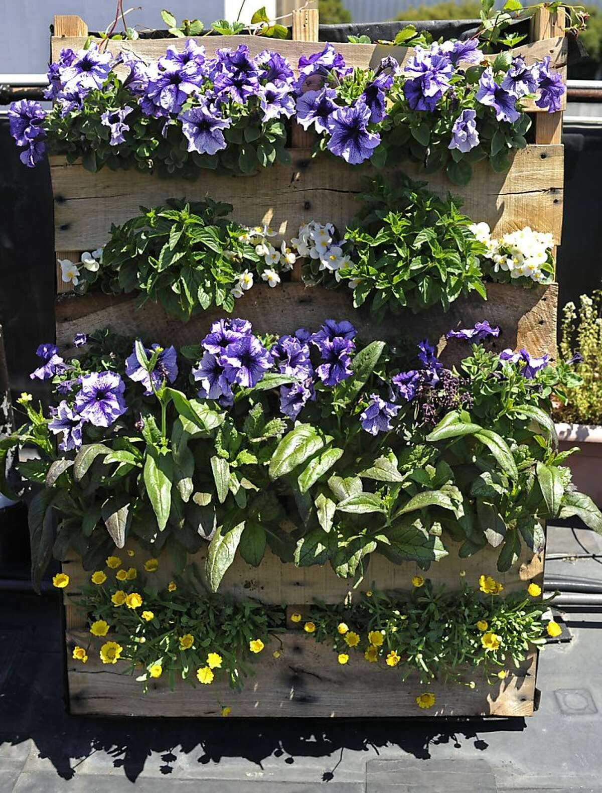 An assortment of flowers and edibles bloom in a shipping pallet turned vertical planter.