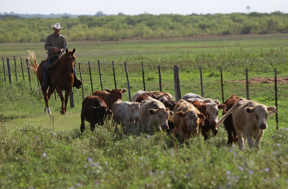 7. Farmers, ranchers and other agricultural managers are involved in fatal workplace incidents at a rate of 25.3 per 100,000 full-time workers. Photo: Kin Man Hui, DM / ©2012 San Antonio Express-News