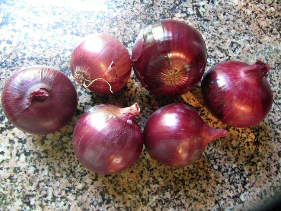 The red onions took longer to ripen but when harvested were larger than the whites. Photo: Contributed Photo / Fairfield Citizen contributed
