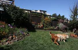 Dobie (left) and Hunter (right) playing in the Olinger garden in San Francisco, Calif., on Tuesday, September 11, 2012.