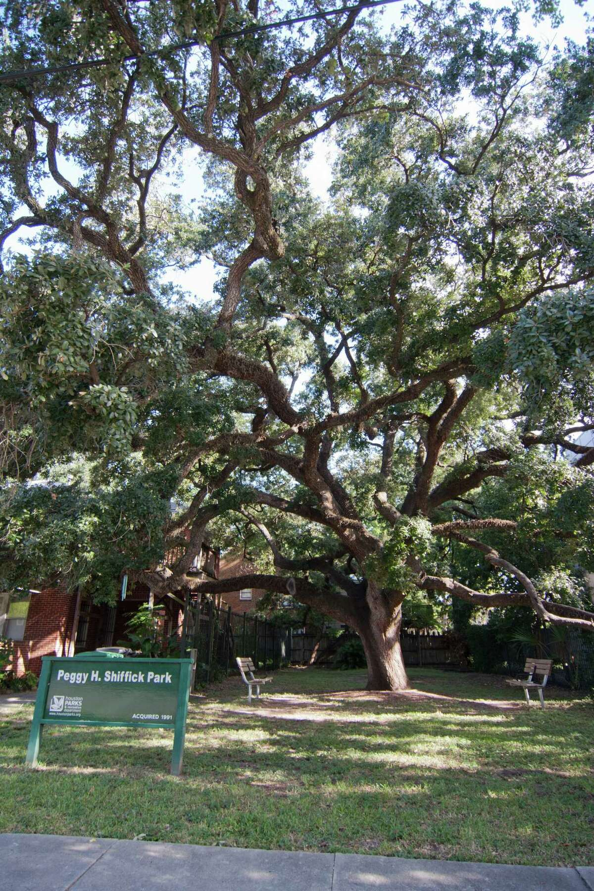 Neighbors want to protect a large oak at Peggy Shiffick Park.