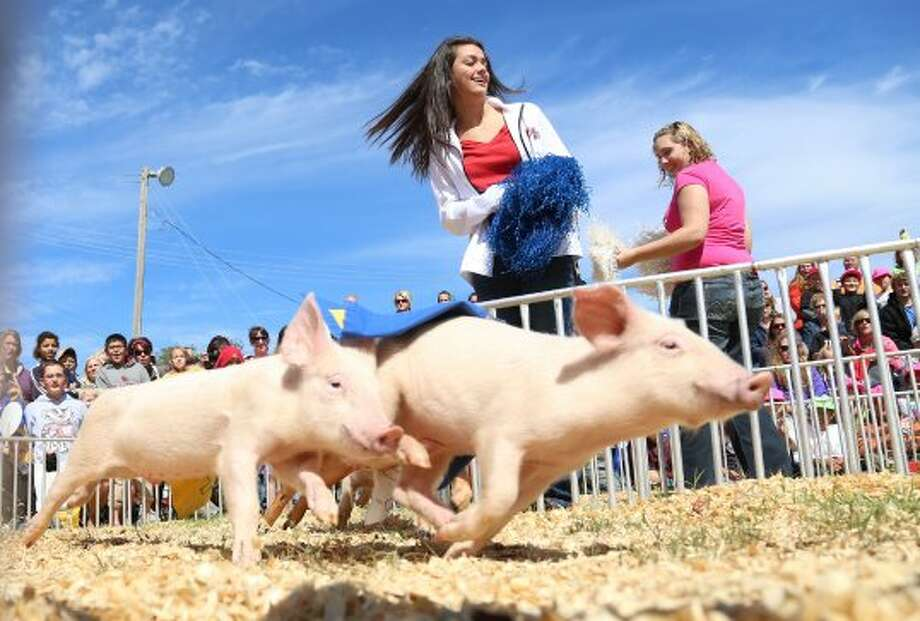Kimmy Moore, 13, cheers on the pigs as they race for a cookie Friday, Sept. 14, 2012, at the Hedrick's Pig Racing exhibit at the Kansas State Fair in Hutchinson, Kan. (AP Photo/The Hutchinson News, Travis Morisse) (Associated Press)