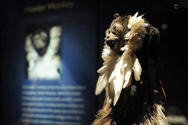 This naturally mummified howler monkey  is from the Gran Chaco plain of Argentina.