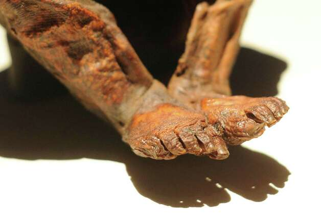 The Detmold Child is a Peruvian mummy of a youth who died about 6,500 years ago. Photo: Billy Calzada, San Antonio Express-News / © San Antonio Express-News