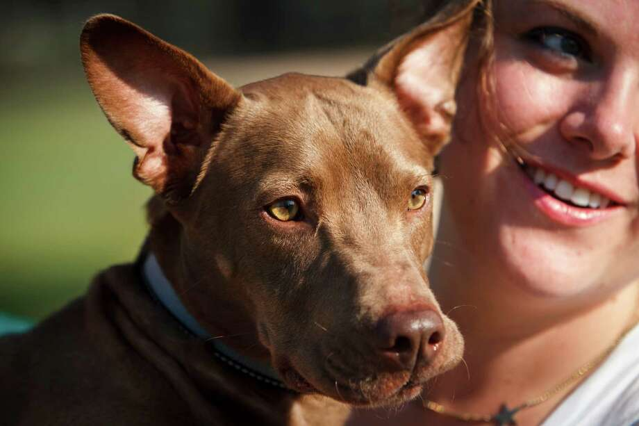 Rhonda McManus pets her dog, Toby, who was recently adopted from BARC, Tuesday, Sept. 18, 2012, in Houston.  Photo: Michael Paulsen / © 2012 Houston Chronicle