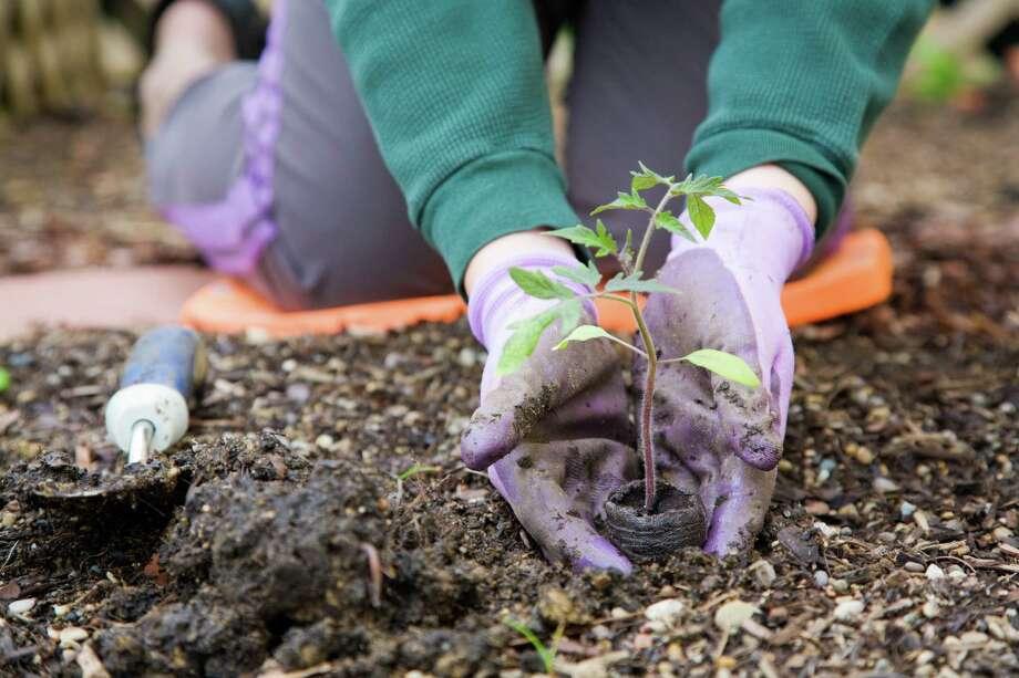 Urban Harvest's I Grow-Houston initiative is helping neighborhoods build community gardens. The first garden is being developed in Sunnyside. Photo: Alexey Stiop / iStockphoto