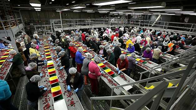 Workers sort cherries at the Delta Packing Co. plant in Lodi. The state's crop has already been affected by climate change. Photo: Serene Fang, California Watch