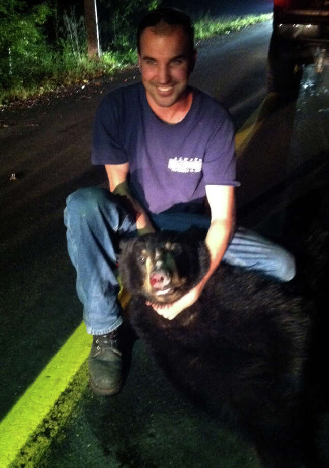 George Muttick, 24, of Hunters Mountain Road, Oxford, poses with the black bear that was killed when it ran into the side of his pickup truck Wednesday night. Muttick a volunteer Oxford firefighter, took the bear carcass home. He had it gutted and sent the pelt to a tannery where itâÄôs being made into a rug. Photo: Contributed Photo
