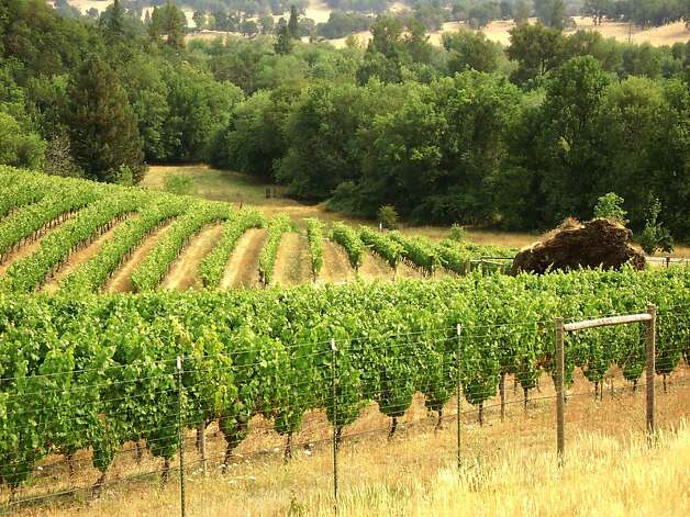 Abacela Winery in Roseburg, Ore., planted the first successful Tempranillo vineyard in Oregon. Photo: Paula C. Caudill