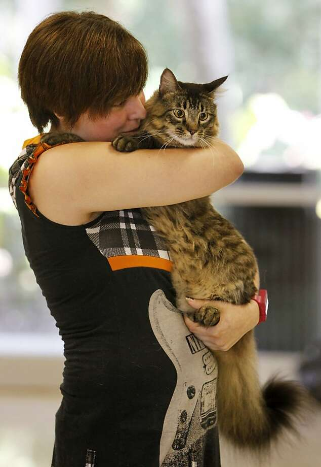 Big cat on campus:Junior Dana Schletter hugs Totoro after the Maine Coon got a clean bill of health at the Eckerd College pet Health Check in St. Petersburg, Fla. Eckerd allows students to have pets if they are registered and pass a health screening. Photo: James Borchuck, Associated Press