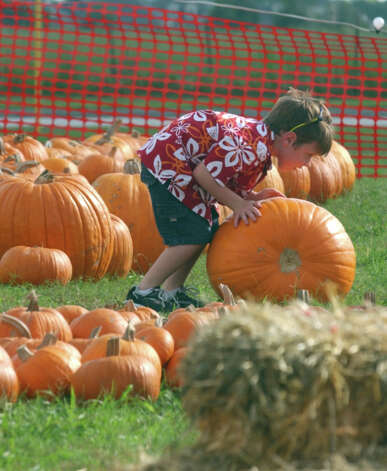 Five-year-old Cameron Barrett tries to roll the pumpkin he wants over to his parents for inspection as they picked a pumpkin in October, 2004. Enterprise file photo