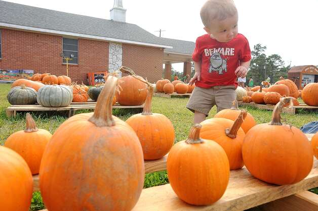 Cole Prejean, 1, walks through a pumpkin patch at Winfree Baptist Church just before Halloween. Published October 28, 2010. Guiseppe Barranco/The Enterprise / Beaumont