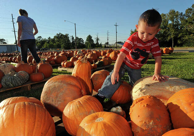 Brenden Gallier, 2, steps over a pumpkin to grab the one he wants at Winfree Baptist Church in Orange on Monday, October 3, 2011. Christina Gallier walks by. Guiseppe Barranco/The Enterprise Photo: Guiseppe Barranco